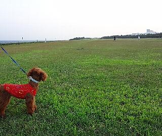 総合公園.jpg