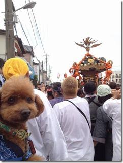 浦安三社祭日曜0004